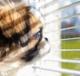 собачка смотрит в окно