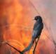 птичка на фоне огня