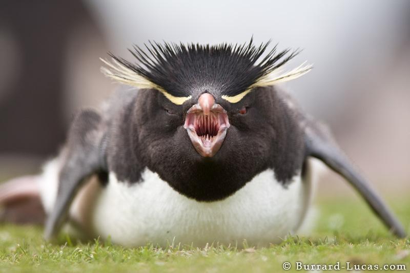 Просування фраз в гугл під час дії алгоритму пінгвіна